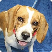 Adopt A Pet :: Maude - Jackson, MI