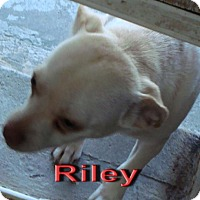 Adopt A Pet :: Riley - Coleman, TX