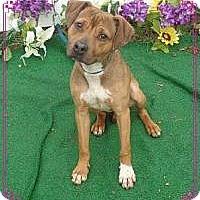 Adopt A Pet :: Lainey - Lebanon, ME