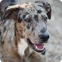 Adopt A Pet :: Eerie - Hudson, NH