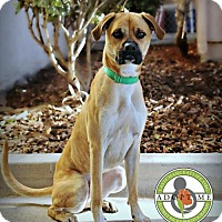 Adopt A Pet :: Thurston - Oceanside, CA