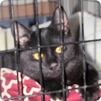 Adopt A Pet :: Ringo - Germantown, MD