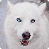 Adopt A Pet :: Desna - Jupiter, FL