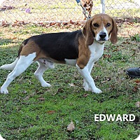 Adopt A Pet :: Edward - Washington, GA