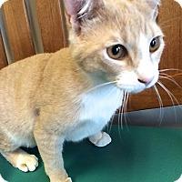 Adopt A Pet :: Marcel - san diego, CA