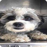 Adopt A Pet :: TOBY - San Antonio, TX