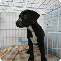 Adopt A Pet :: Sassafras - Valley Falls, KS