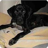 Adopt A Pet :: Frasia - Cumming, GA