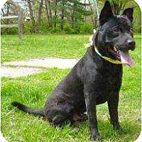 Adopt A Pet :: Mel - Antioch, IL