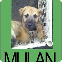 Adopt A Pet :: MULAN - Hollywood, FL