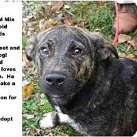 Adopt A Pet :: # 627-09 @ Animal Shelter - Zanesville, OH