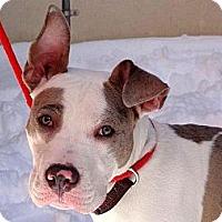 Adopt A Pet :: Zeppelin - Shavertown, PA