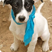 Adopt A Pet :: Rex - Knoxville, TN