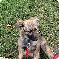 Adopt A Pet :: Maxine - Saskatoon, SK