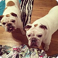 Adopt A Pet :: Cookey & Rocky - Decatur, IL