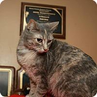 Adopt A Pet :: Tika - Geneseo, IL