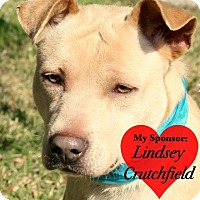Labrador Retriever Mix Dog for adoption in San Leon, Texas - Goldie