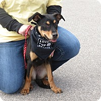 Adopt A Pet :: Millie - in Maine - kennebunkport, ME