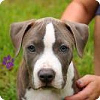 Adopt A Pet :: Clyde - Gainesville, FL