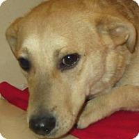 Adopt A Pet :: Jack - Lincolnton, NC