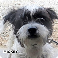 Adopt A Pet :: Mickey - Lindsay, CA