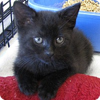 Adopt A Pet :: Diesel - Berkeley Hts, NJ