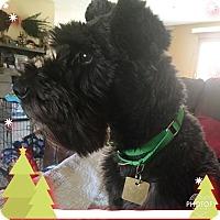 Adopt A Pet :: Chloe~Adoption Pending - Sharonville, OH