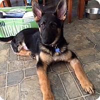 Adopt A Pet :: Skye - Modesto, CA