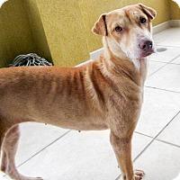 Adopt A Pet :: Corky - Marina del Rey, CA