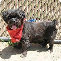 Adopt A Pet :: WALT - Norco, CA