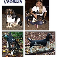 Adopt A Pet :: Vanessa - Marietta, GA