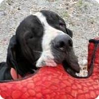 Adopt A Pet :: Bandit - Jupiter, FL