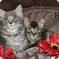 Adopt A Pet :: Peebles and Bam Bam - Lorain, OH