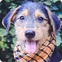 Adopt A Pet :: Andre - San Ramon, CA