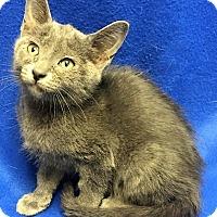 Adopt A Pet :: Aladdin - Watauga, TX