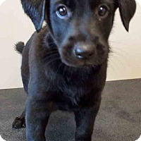 Adopt A Pet :: ADOPTED!!!   Titus - Shorewood, IL