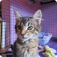 Adopt A Pet :: Willow - Coos Bay, OR
