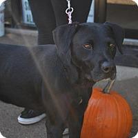 Adopt A Pet :: Sky - Midland, VA
