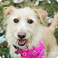 Adopt A Pet :: Ellie - Nashville, TN
