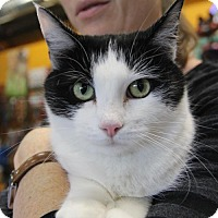 Adopt A Pet :: Stardust - Littleton, CO