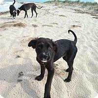 Adopt A Pet :: JAYCE - Gloucester, VA