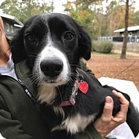 Adopt A Pet :: Wanda Marie - Freeport, FL