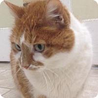 Adopt A Pet :: Elma Mae - Cloquet, MN