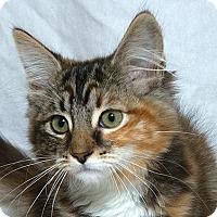 Adopt A Pet :: Ginger M - Sacramento, CA