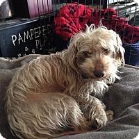 Adopt A Pet :: Leonardo - West Palm Beach, FL