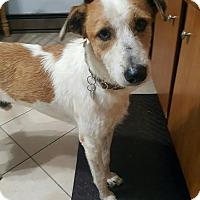 Adopt A Pet :: Zane - Franklinville, NJ