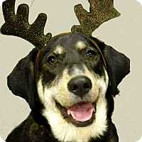Adopt A Pet :: Willah - Portland, IN
