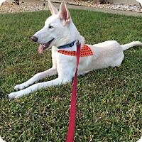 Adopt A Pet :: Luca - Orlando, FL
