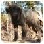 Photo 2 - Golden Retriever Mix Dog for adoption in Tyler, Texas - AST-Pumba