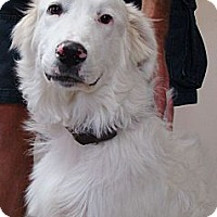 Adopt A Pet :: Ozzie  *Adopted - Oklahoma City, OK